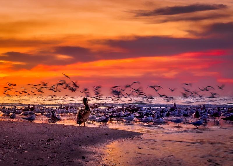 Pelican Watch at Clam Pass Beach