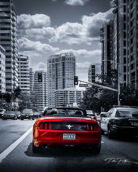 IS#7 - L.A. Mustang - Isolation Series - Dee Potter Photography