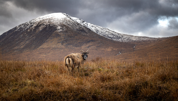 garth fuchs-46 - Wildlife - Garth Fuchs Photography