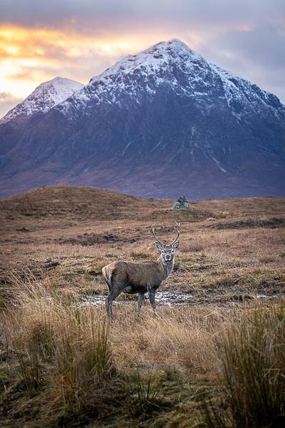 garth fuchs-49 - Wildlife - Garth Fuchs Photography