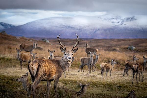 garth fuchs-55 - Wildlife - Garth Fuchs Photography
