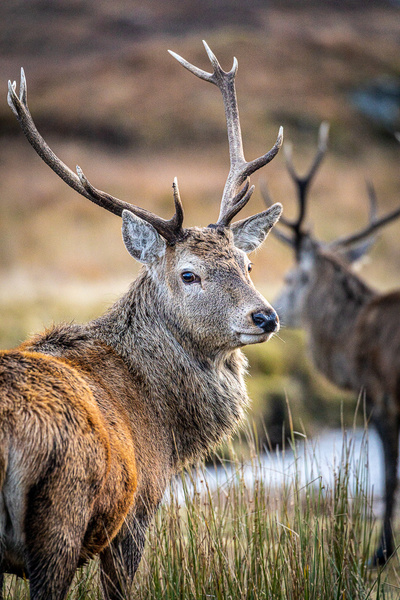 garth fuchs-53 - Wildlife - Garth Fuchs Photography