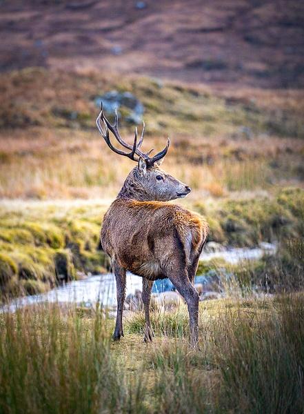 garth fuchs-54 - Wildlife - Garth Fuchs Photography