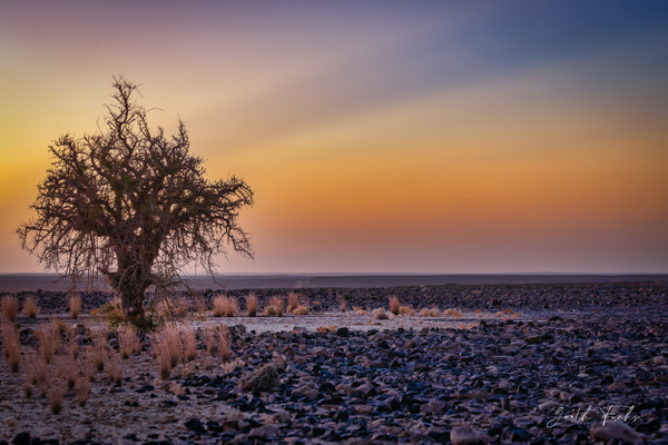 Lone Tree in Desert-1 - Special: Namibia - Garth Fuchs Photography