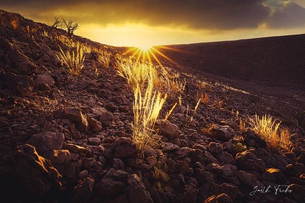 Grass in the sun in the Yemeni Desert-1 - Special: Namibia - Garth Fuchs Photography