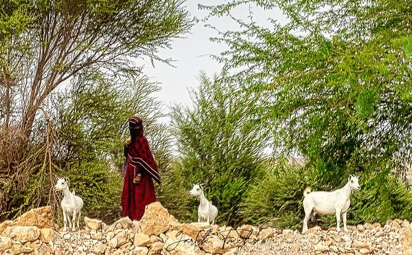 Bedouin with the herd in Yemen-1 - Special: Namibia - Garth Fuchs Photography