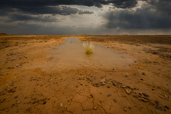 Desert Rain in Yemen - Special: Namibia - Garth Fuchs Photography