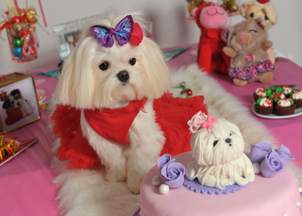 small-dog-pet-party - Galleries of our Best Photography, Video and Graphic Design by LLP