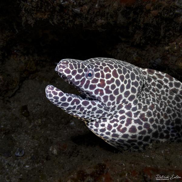 DIVE - Murène 001 - Underwater - Patrick Eaton Photography