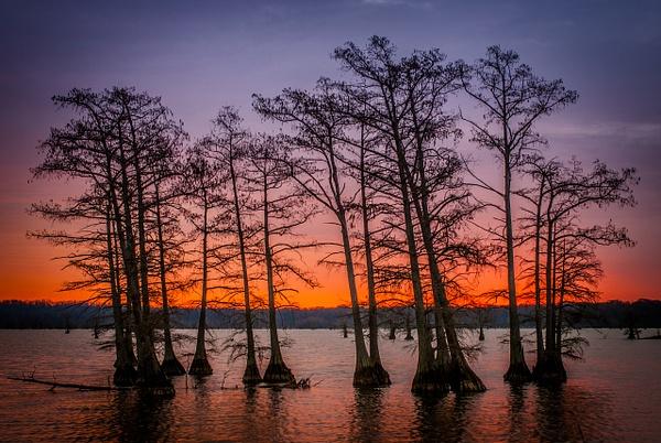 Sunrise at Reelfoot - Landscapes - Blackburn Images Photography