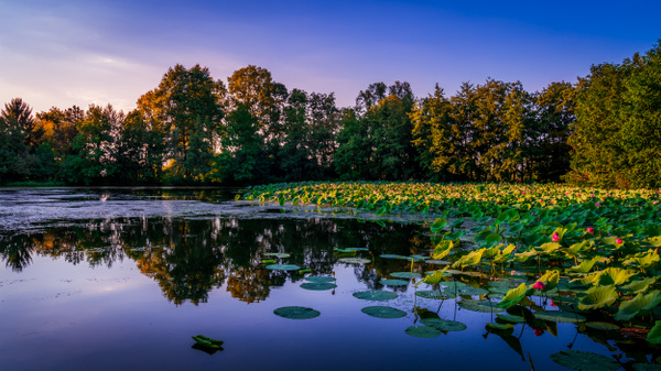 Pond-Etang Prêle-France-La Dombes-Sunset - Landscapes - Thomas Speck Photography