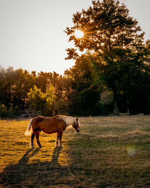 Horse-Backlit-Golden Hour - Home - Thomas Speck Photography