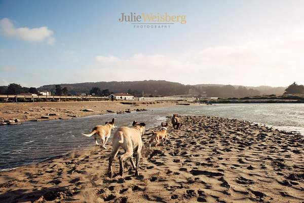 JulieWeisberg_logo_Paige_14