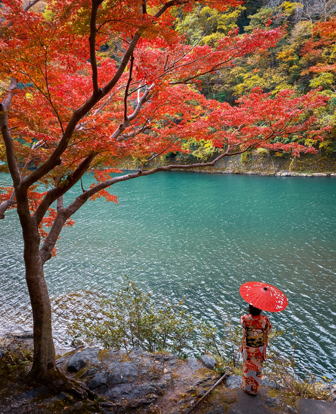 maple - Japan in Autumn - Kirit Vora Photography