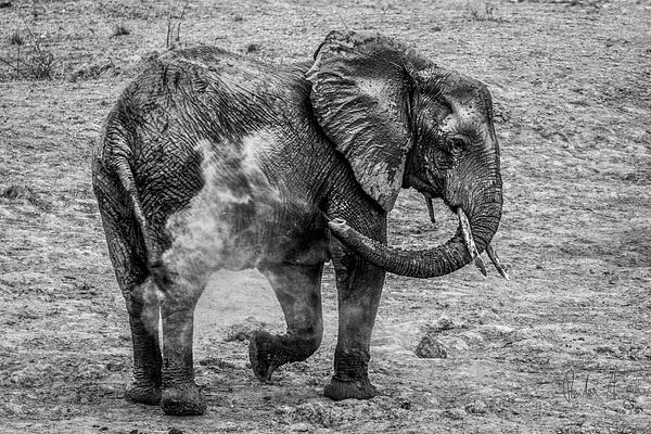 Zambia-Elephant-3 by ReiterPhotography