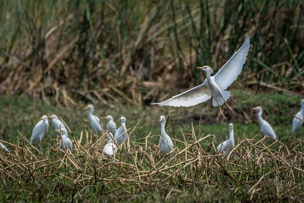 Zambia-Bird by ReiterPhotography