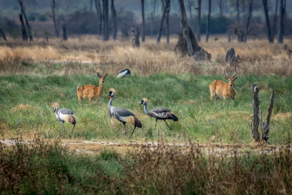 Zambia-Green-Grass-Animals by ReiterPhotography