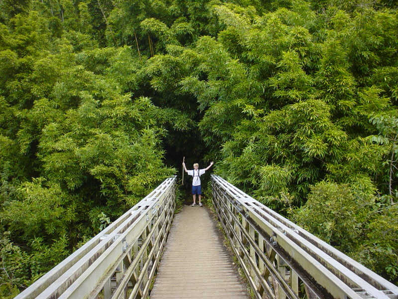 Bridge-Bambo_.2
