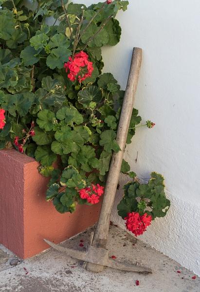 20170218-Oaxaca-0031 by Richard Isenhart