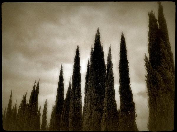 Vintage Scene Cypress - California - Joanne Seador Photography