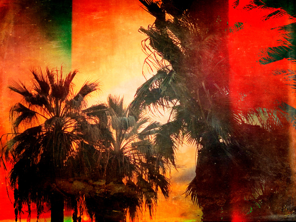 Palm Trees No 2 - California - Joanne Seador Photography