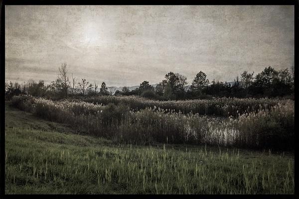 Olana swamp, 2 - Olana - Joanne Seador Photography