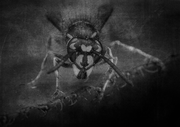 _DSC0497bw - Insects - Molin Photos