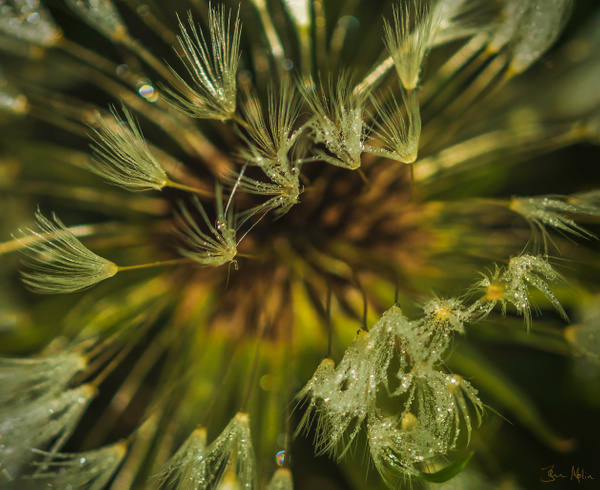 top withering - flower of all kind and leaves molin photografy