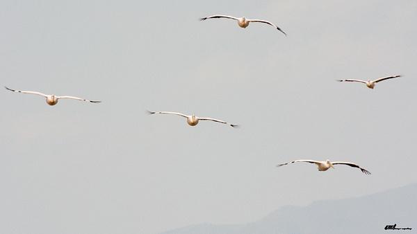 Lake Manyara by soulJAH