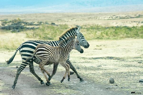 Ngorongoro by soulJAH