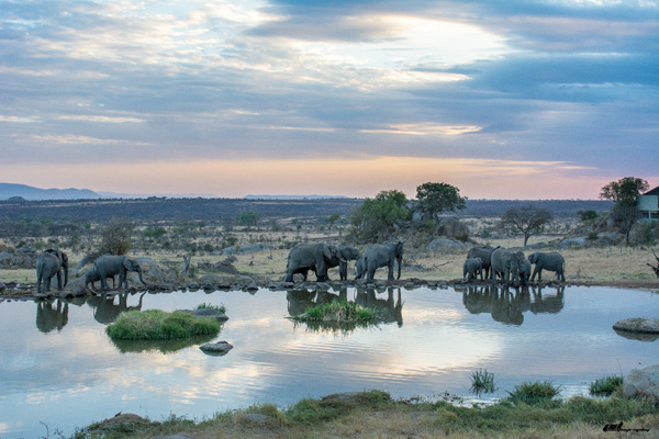 Serengeti by soulJAH