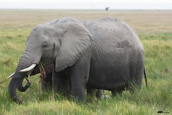 Amboseli NP by soulJAH