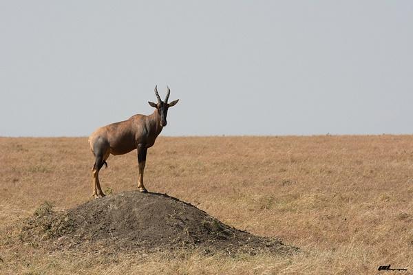 Masai Mara by soulJAH