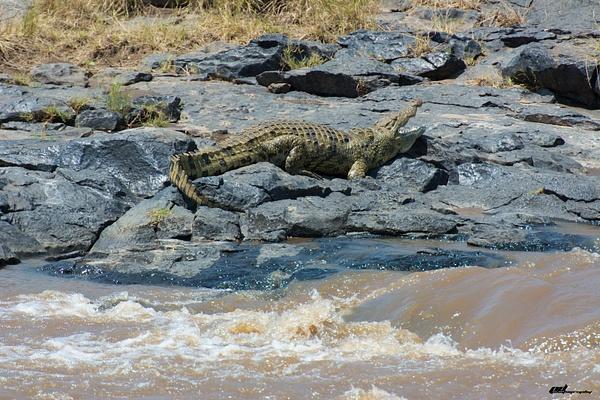 Mara River by soulJAH