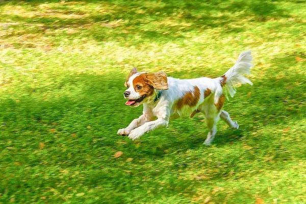 DSC01432 - Dogs - Jim Krueger Photography