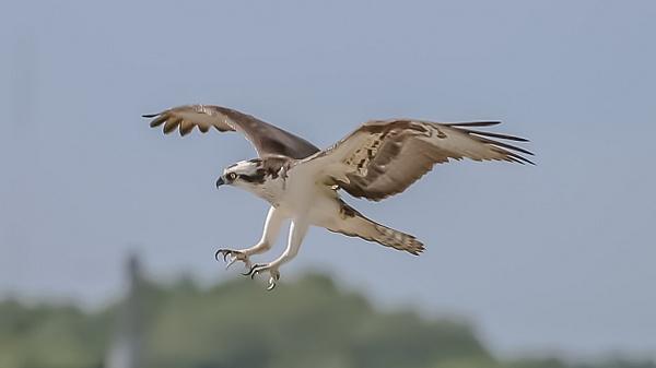 128_2824a - Wildlife - Jim Krueger Photography