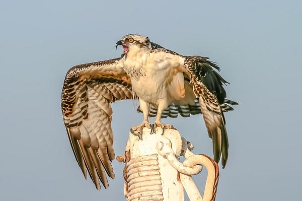 136_3611abc-2 - Wildlife - Jim Krueger Photography