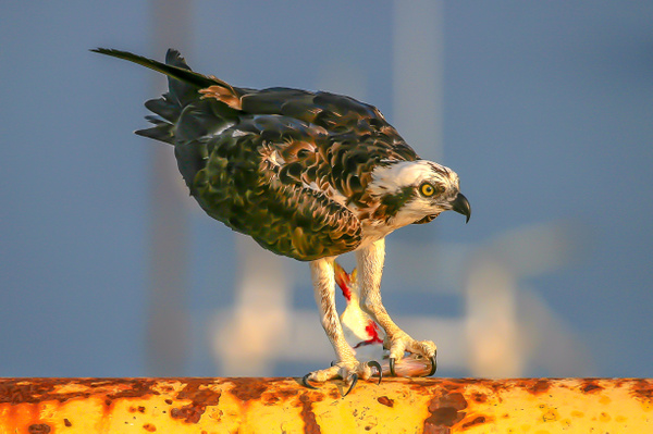 139_4000ab-2 - Wildlife - Jim Krueger Photography