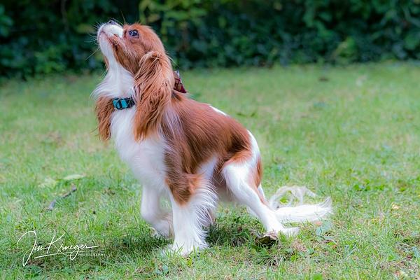 Harrison - Dogs - Jim Krueger Photography