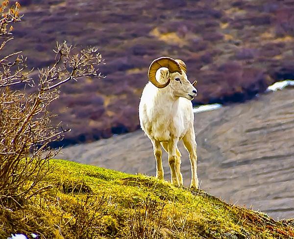 DSC08262 - Wildlife - Jim Krueger Photography
