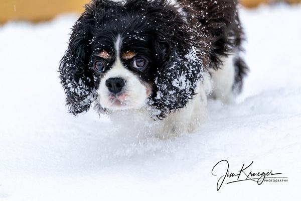 DSC07269-1 - Dogs - Jim Krueger Photography