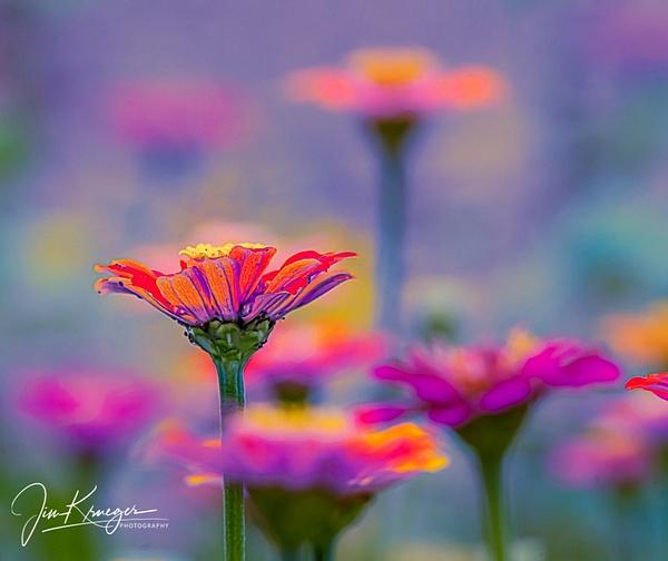 Translucent Garden - Landscape - Jim Krueger Photography