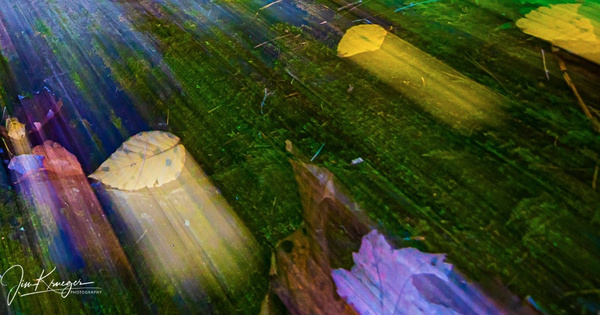 Fall Leaves 7.37.51 PM - Landscape - Jim Krueger Photography
