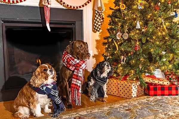 Harrison, Waylon & Henry - Dogs - Jim Krueger Photography