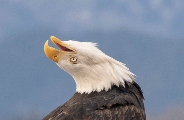 eagle-6 - Eagles - Graham Reichardt Photography
