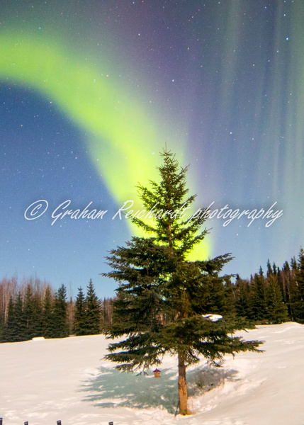 Aurora Chandlers farm Fairbanks. canvas print A4+ size $65 - Shops - Graham Reichardt Photography