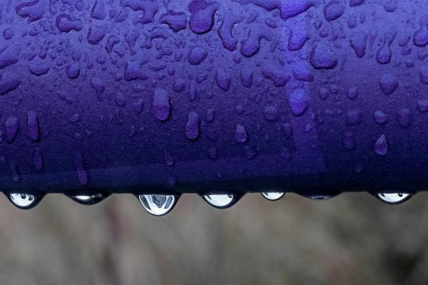 Purple Rain - Portfolio - Brad Balfour Photography