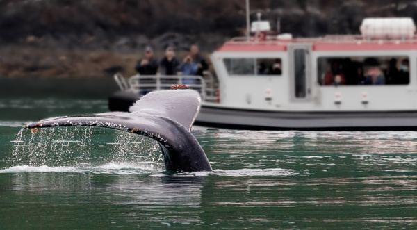 Whale Tail - Portfolio - Brad Balfour Photography