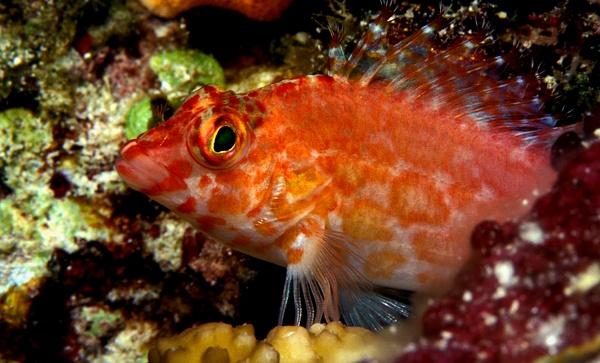 Palau  1154-1 - Marinelife - Keith Ibsen Photography