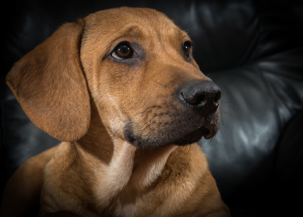 1612_MaxBuddy121416217217-1 - Dogs and Puppies - KeithIbsenPhotography